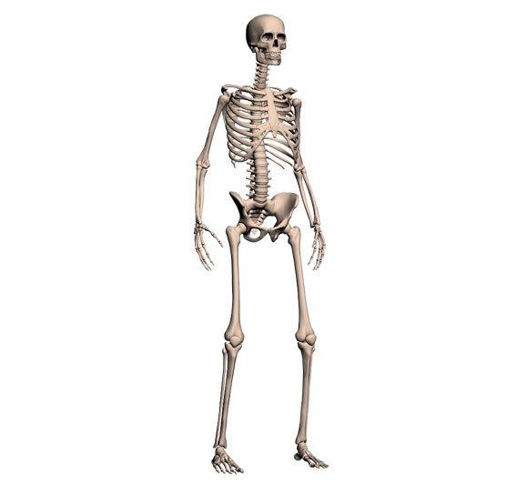 скелет на страницах мужского журнала brodude