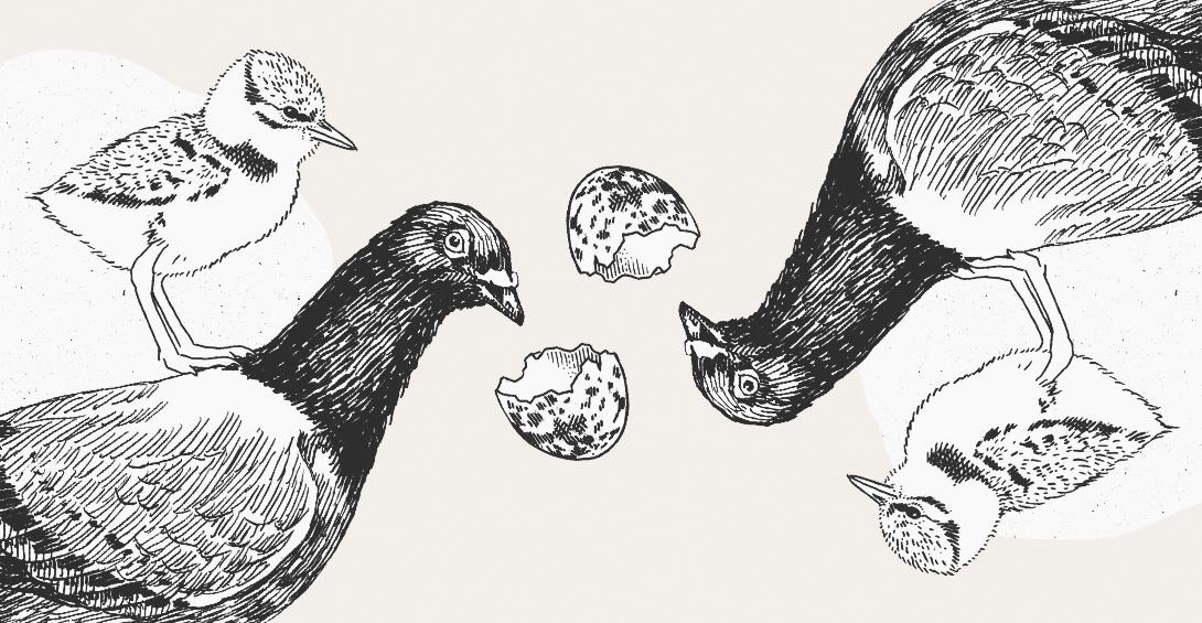 факты про голубей