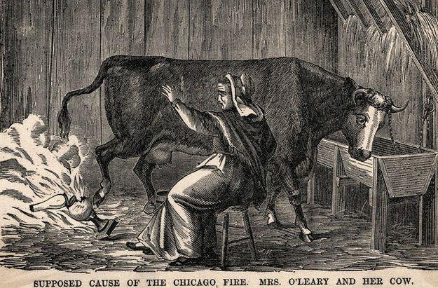корова из-за которой начался Чикагский пожар